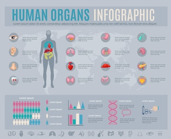 Human organs infographic set with internal body parts symbols and charts