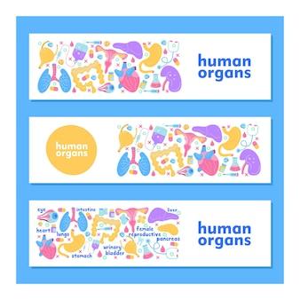 Human organs. a set of vector elements.
