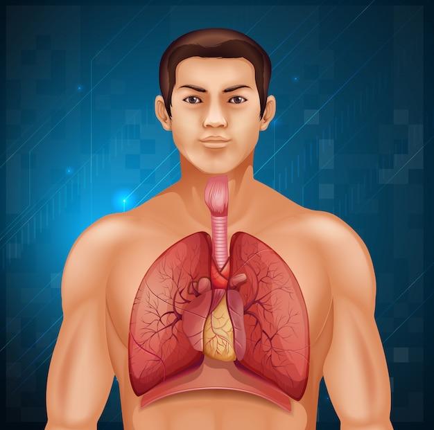 人間の呼吸器系