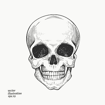 Human scull illustration. hand drawn skeleton illustration.