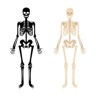 Человеческий скелет. черно-белая иллюстрация скелета анатомии костей