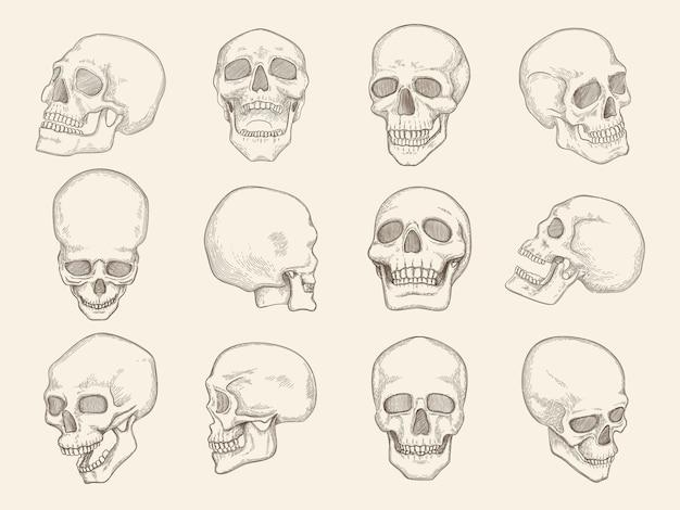 인간의 두개골. 다른 관점에서 두개골의 눈과 입 벡터 삽화가 있는 머리 뼈의 해부학 사진. 해골 인간의 머리, 스케치 사악한 해골