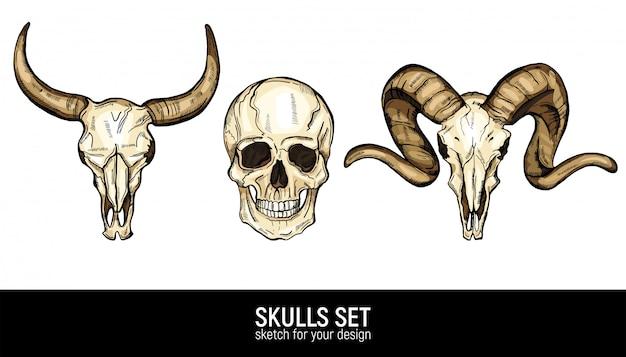 인간의 두개골과 동물 두개골 세트를 스케치합니다.
