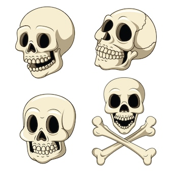 Human skull collection set isolated on white background