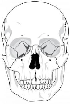 Free Vector Skulls Clip Art
