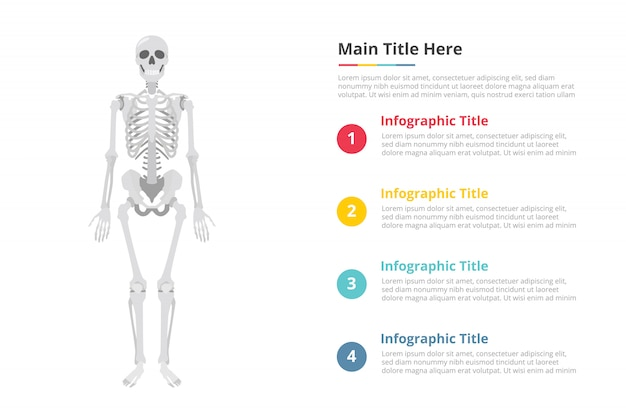 Human skull infographics template with free space of text with various color and description