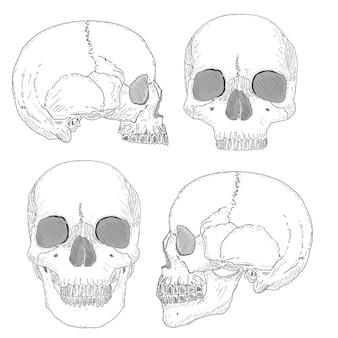 인간의 두개골 흰색 절연