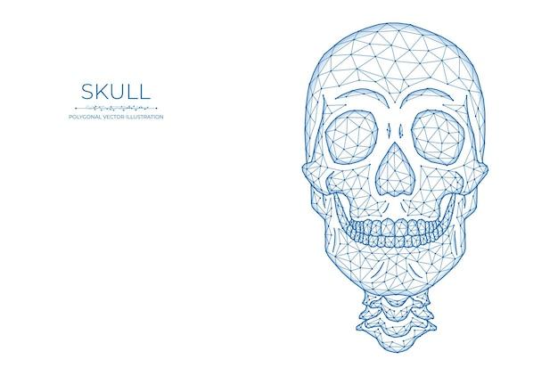 人間の頭蓋骨の低いポリアート。頭蓋骨の正面図の多角形のベクトル図。