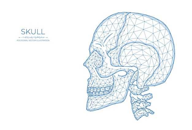 人間の頭蓋骨の低いポリアート。頭蓋骨の側面図の多角形のベクトル図。