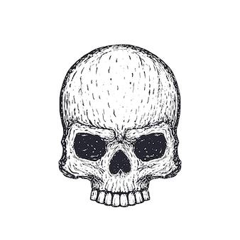 흰색, 손으로 그린 벡터 일러스트 레이 션에 인간의 두개골
