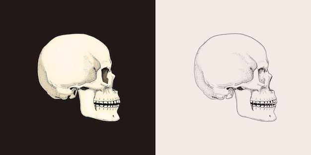 人間の頭蓋骨レトロな古い学校のスケッチのビンテージスタイルのモノクロシンボル手描きのタトゥー