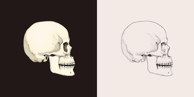Human skull retro old school sketch for tattoo in vintage style monochrome symbol hand drawn