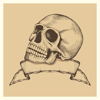 Human skull sketch with ribbon banner  vector