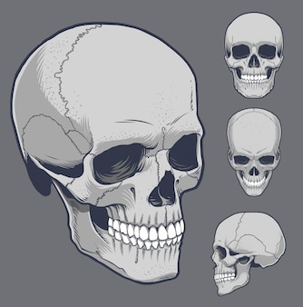 Human skull in various angle