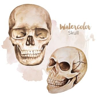 Human skull watercolor style