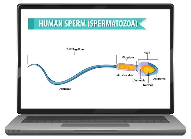 Sperma umano sul desktop del laptop