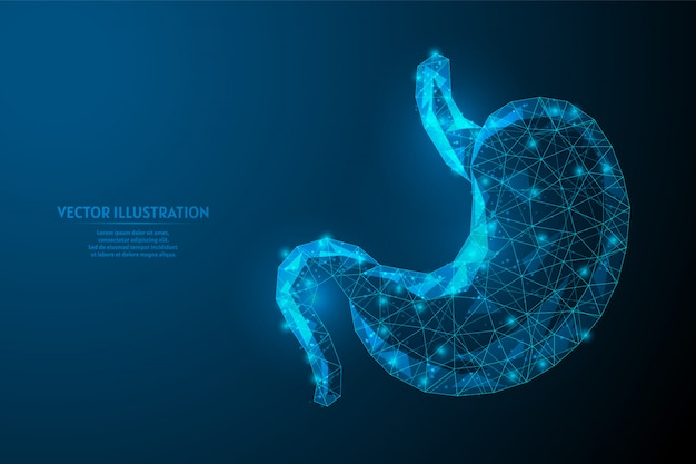 Human stomach close up. organ anatomy. digestive system. ulcer, cancer, gastritis, dysbiosis. innovative medicine and technology. 3d low poly wireframe illustration.