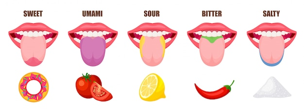 Human tongue basic taste areas. five taste zones in a mouth - sweet, salty, sour, bitter and umami. educational, schematic illustration isolated on white background.
