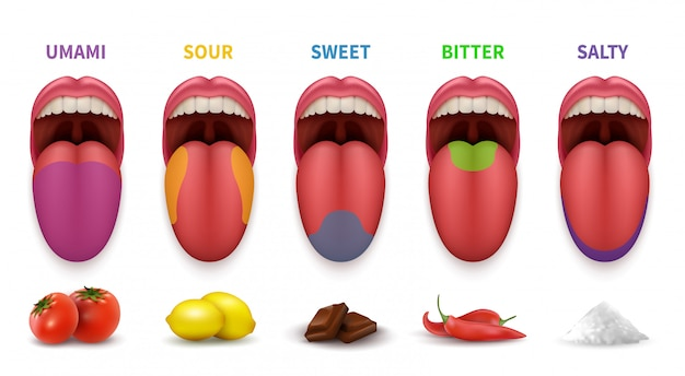 Human tongue basic taste areas