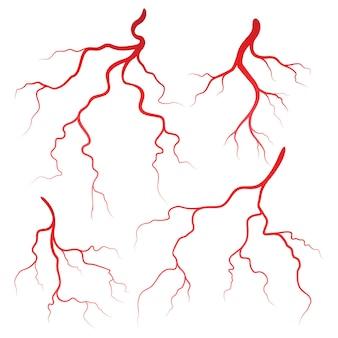인간의 정맥과 동맥 일러스트 디자인 서식 파일