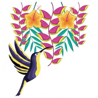 ハチドリ鳥の花、熱帯