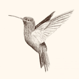 Hummingbird flaps its wings and flies. pencil hand drawing sketch on a beige background.
