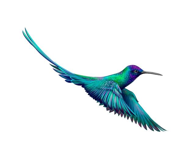 수채화의 스플래시에서 벌새, 손으로 그린 스케치. 그림 물감