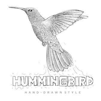 Hummingbird vector in fly. hand drawn animal illustration