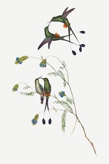 ハチドリのベクトル動物アートプリント、ジョングールドとヘンリーコンスタンティンリヒターのアートワークからリミックス