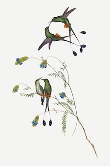 Hummingbirds vector animal art print, remixed from artworks by john gould and henry constantine richter