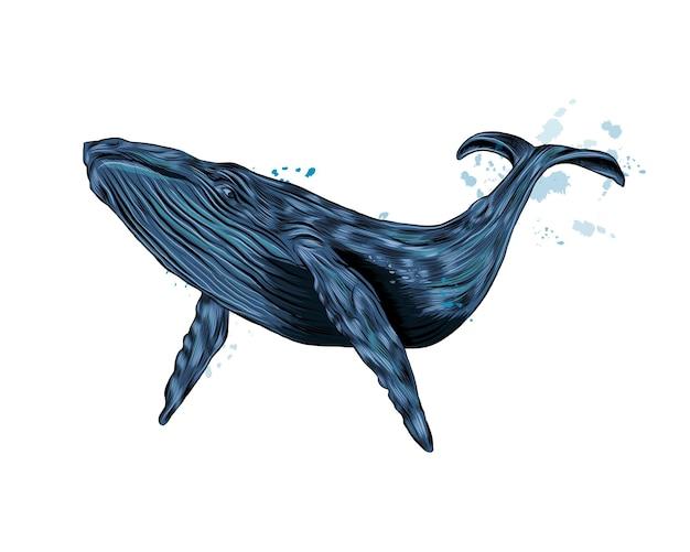 Горбатый кит, синий кит из всплеска акварели, цветной рисунок, реалистичный.
