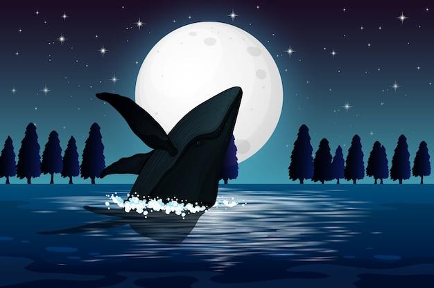 自然のシーンのシルエットのザトウクジラ