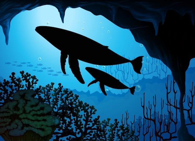 自然シーンのシルエットでザトウクジラ