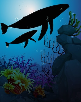 Humpback whale in natura scena silhouette
