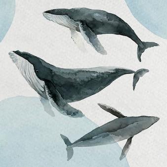 Акварельная живопись горбатого кита в векторе акварели баннер