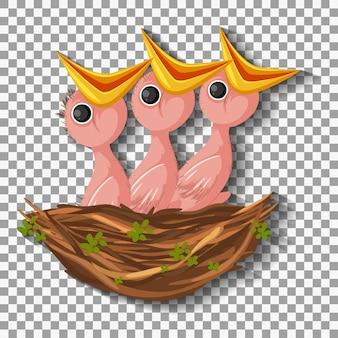 둥지에서 음식을 기다리는 배고픈 병아리