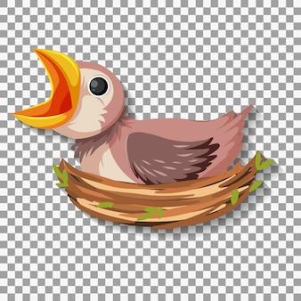 Голодный цыпленок ждет еды в гнезде