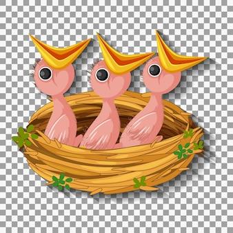 巣の中で食べ物を待っている空腹のひよこ