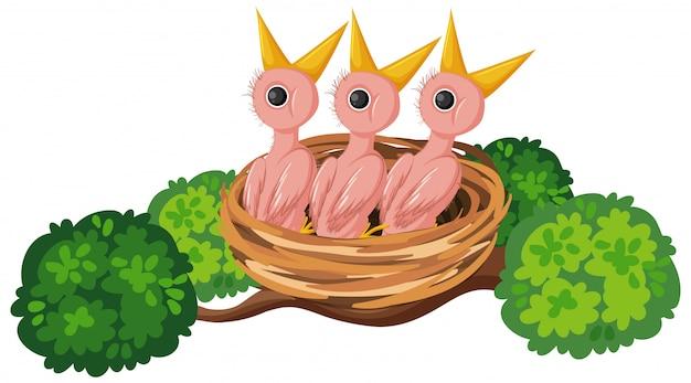 巣の空腹のひよこ