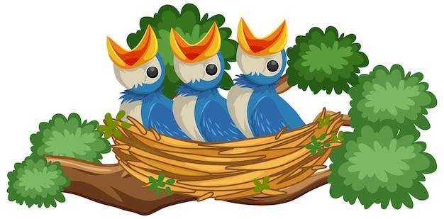 둥지에 배고픈 병아리