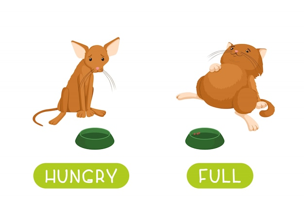 Hungry and full. illustration for children as a teaching aid