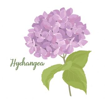 Hydrangea flower in watercolor style