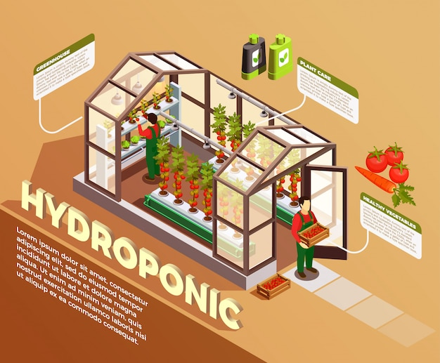 Hydroponic isometric composition