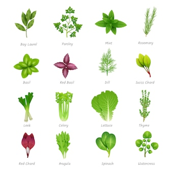 Icons set of different special herbs