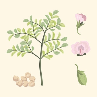 Fagioli e pianta illustrati dei ceci