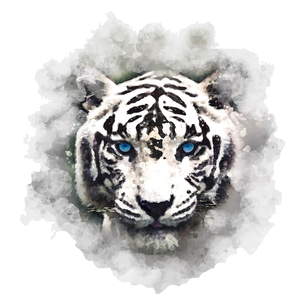 Illustration of bengal tiger.