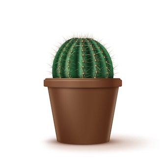 Illustration of big golden barrel cactus or echinocactus grusonii growth in brown clay pot isolated on white background