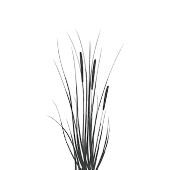 Illustration of black and white reeds.cane silhouette on white background.