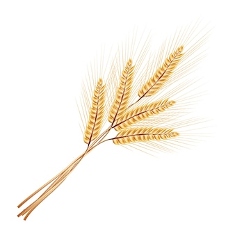 Illustration. bunch of wheat ears. isolated on white background.
