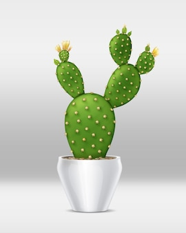 Illustration of bunny ear cactus with yellow blossoms in white pot isolated on background